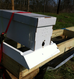 nuc on hive stand
