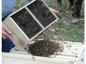 Credit (Photo): Kelley Beekeeping