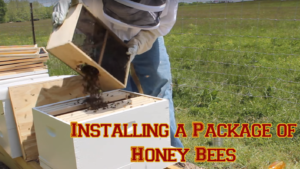 how to install a package of bees